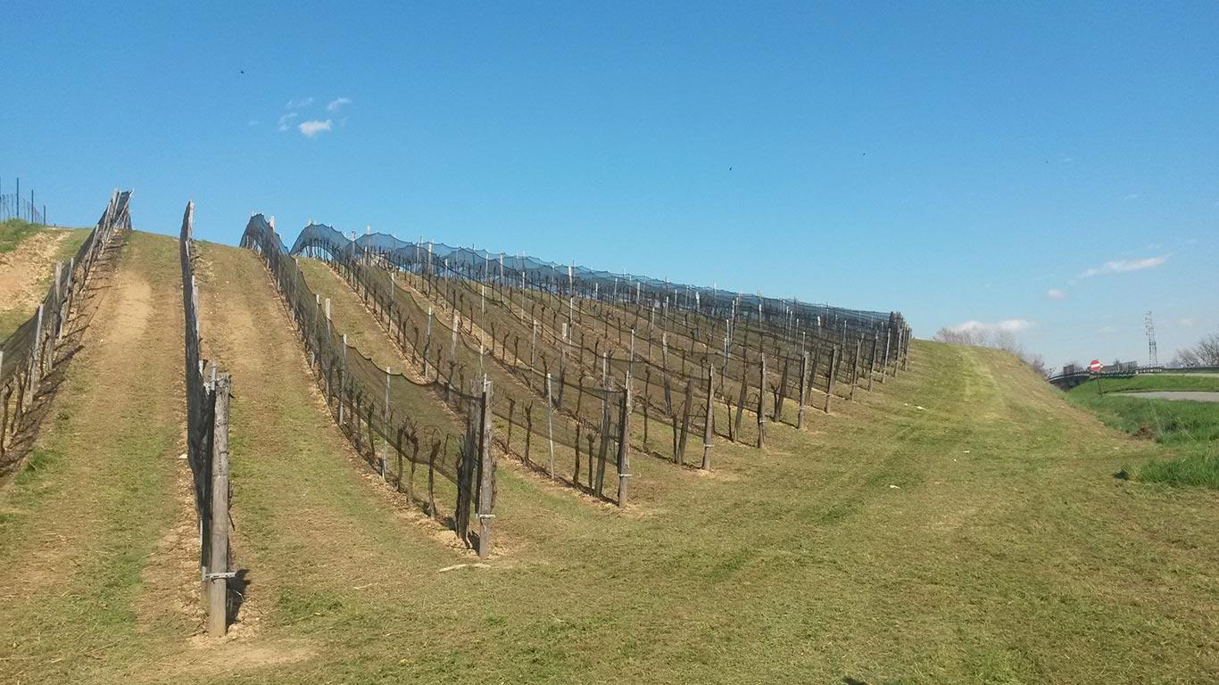 rete antigrandine vigneto uva da vino