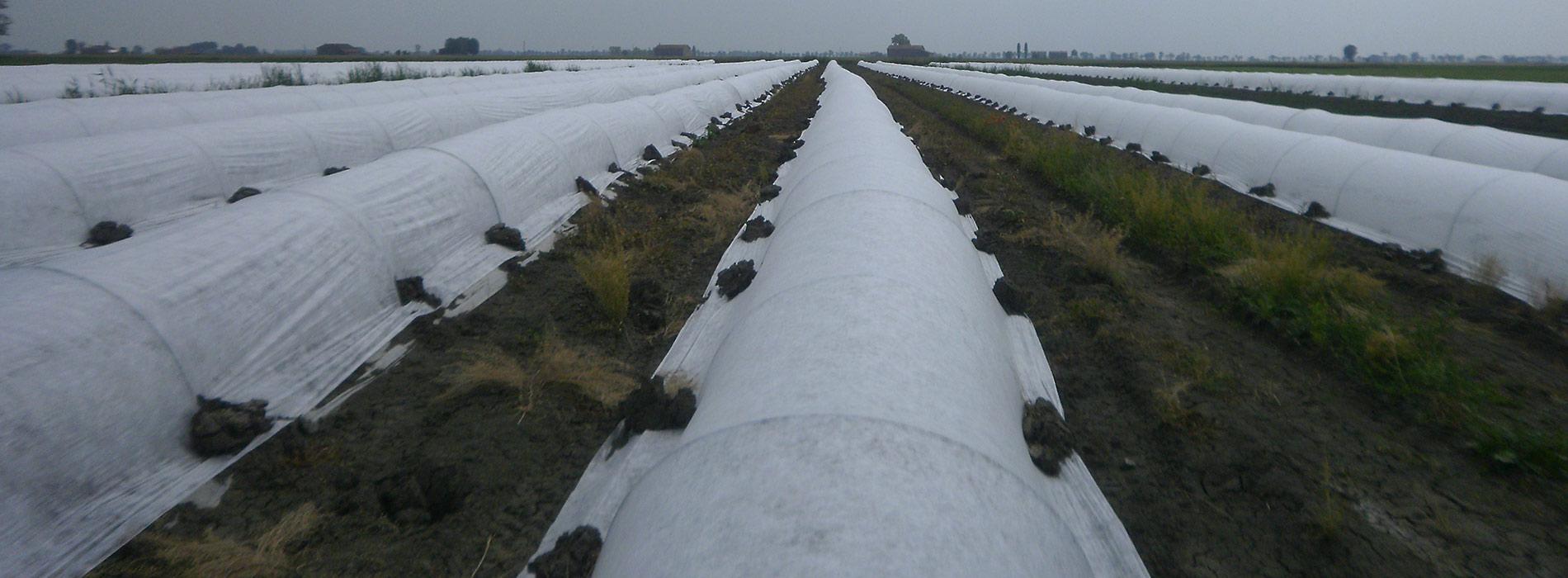 tessuto non tessuto per uso agricolo