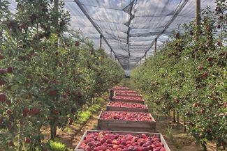 reti antigrandine su frutteto